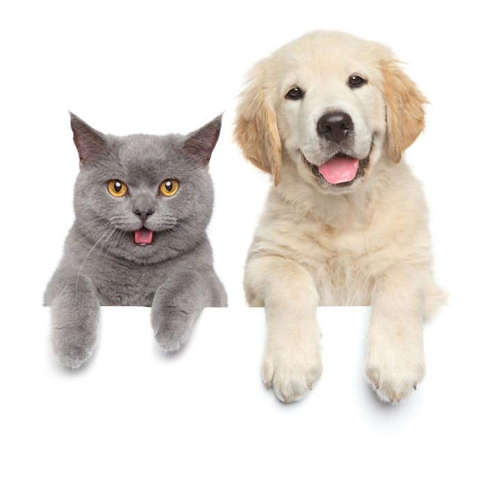 Vets Near Me | Sky Canyon Veterinary Hospital | Grand Junction Colorado