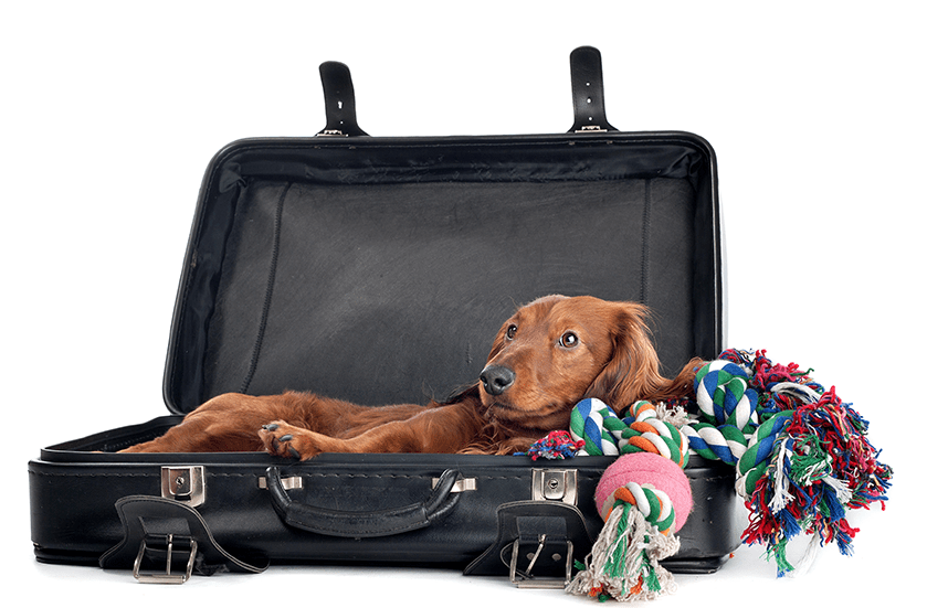 Health Certificates for Dogs & Cats | Sky Canyon Veterinary Hospital | Grand Junction Colorado