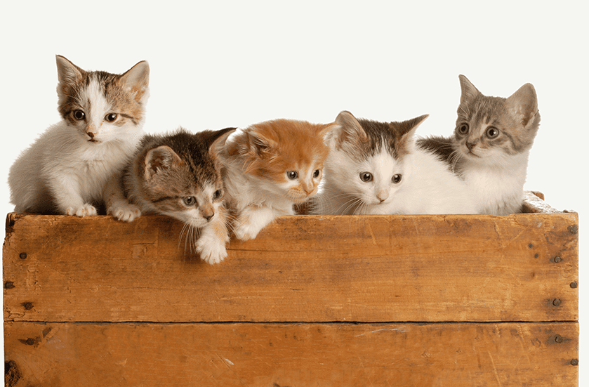 Affordable Spay & Neuter Services for Dogs & Cats | Sky Canyon Veterinary Hospital | Grand Junction Colorado