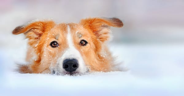 Hypothermia In Dogs & Cats | Sky Canyon Veterinary Hospital | Grand Junction Colorado