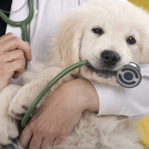 Puppy Care Tips | Sky Canyon Veterinary Hospital | Grand Junction Colorado