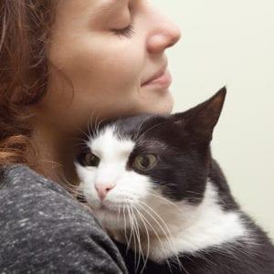Cat Adoption Tips | Sky Canyon Veterinary Hospital | Grand Junction Colorado